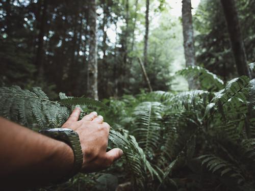 Undurchdringlicher Weg im Dschungel