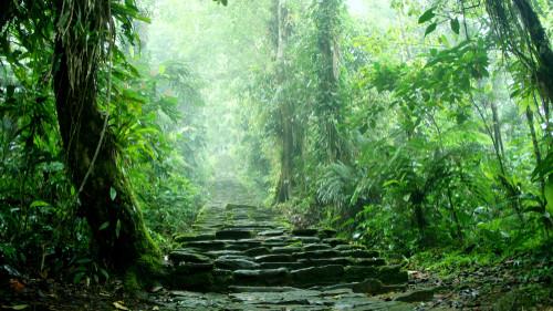 LIBAKO führt Sie durch den Dschungel.